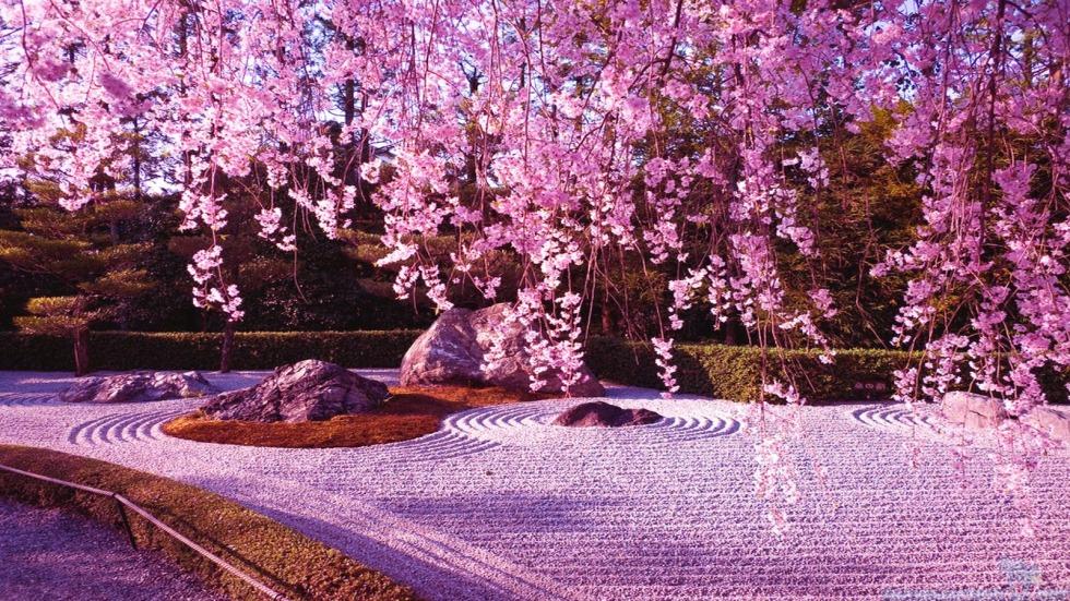 Japanese Cherry Blossom Garden Wallpaper